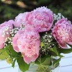 So bleiben Schnittblumen möglichst lange frisch