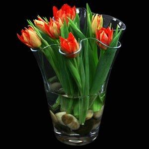 Tulpenvasen